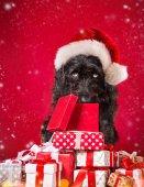 身穿圣诞老人服装的小黑狗