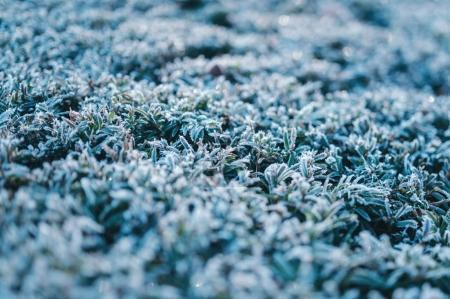 宏的冰冻植物细节