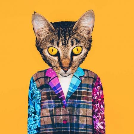 当代艺术拼贴画。无家可归的猫。简约时尚风格