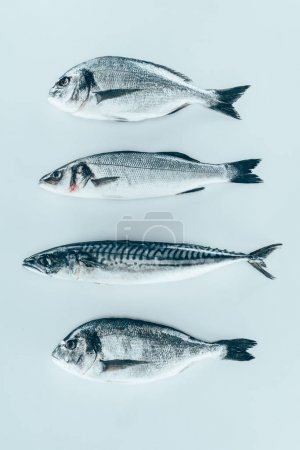top view of assorted uncooked sea fish isolated on grey