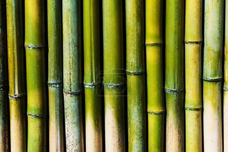 带纹理的背景为绿色竹墙