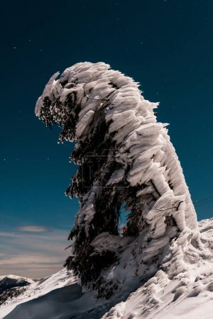 黄昏的时候,山上覆盖着积雪的松树在漆黑的天空中_高清图片_邑石网