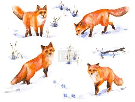 Red Fox Watercolor Sketch