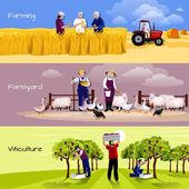 葡萄园农家收割平横幅