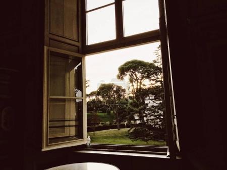 从窗口看清晨草坪上的松树在房子前面
