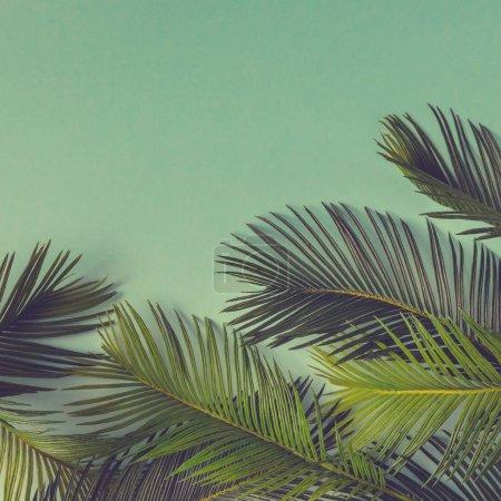 热带棕榈叶