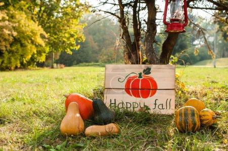 美丽的秋天装饰